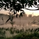 GOMEL, BELARUS. the Mist Spreads Over the Water at Dawn. - VideoHive Item for Sale