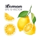 Collection of Lemons - GraphicRiver Item for Sale