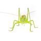 Green grasshopper isolated on a white - PhotoDune Item for Sale