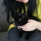 Love for Pets. Beautiful Dark-haired Girl with a Black Cat Is Relaxing at Home in the Living Room - VideoHive Item for Sale