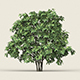 Game Ready Forest Tree 13 - 3DOcean Item for Sale