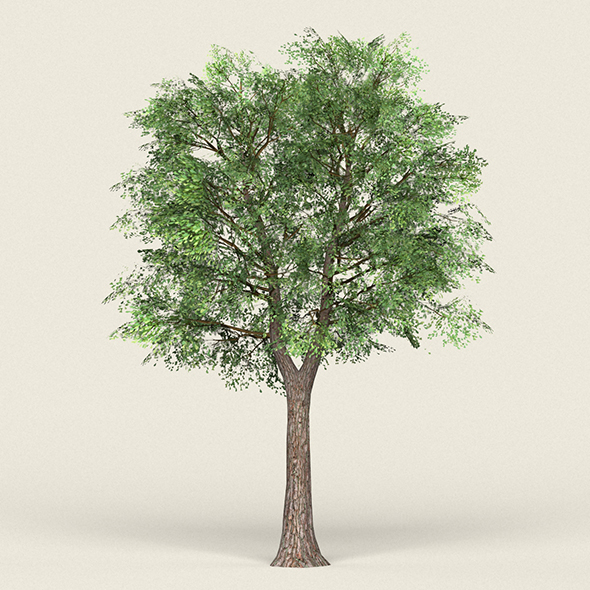 Game Ready Forest Tree 19 - 3DOcean Item for Sale