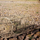 Fish trap on arid soil - PhotoDune Item for Sale