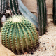 Cactus of spike on ground - PhotoDune Item for Sale