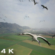 Flying With Common Cranes Over Hula Valley - VideoHive Item for Sale