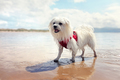 Happy dog playing fetch on the beach - PhotoDune Item for Sale