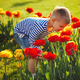 little boy with flowers - PhotoDune Item for Sale