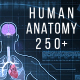 Human Anatomy HUD Pack 200+ - VideoHive Item for Sale