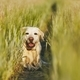 Happy dog in countryside - PhotoDune Item for Sale