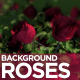 Roses Background - VideoHive Item for Sale
