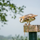 Barn Owl during bird show - PhotoDune Item for Sale