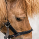 Close up of a head of a cute brown little pony - PhotoDune Item for Sale