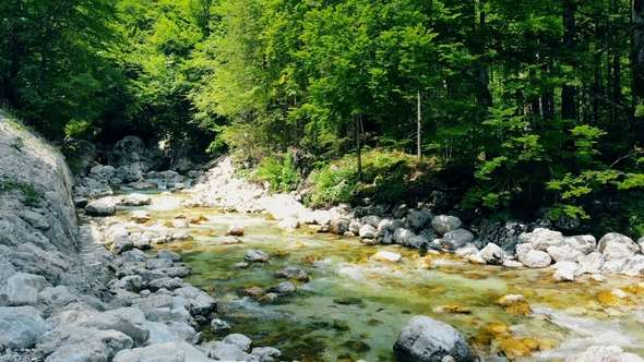 Forest Landscape With A Running Stream Mountain River And Rocks By