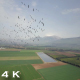 Flying With Common Cranes - VideoHive Item for Sale