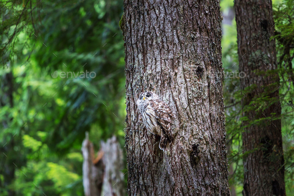 Owl - Stock Photo - Images