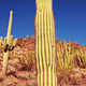 Cactus - PhotoDune Item for Sale