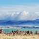Mono lake - PhotoDune Item for Sale