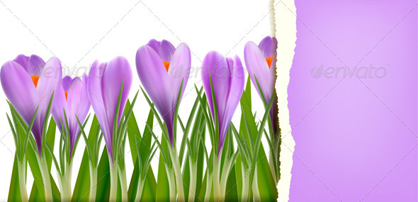 Spring flower background - Backgrounds Decorative