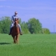 Young Woman Riding Horse in a Field During Summer Sunshine - VideoHive Item for Sale