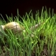 Snail Crawls in Grass - VideoHive Item for Sale