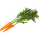 carrot with leaves - PhotoDune Item for Sale