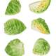 green cabbage on white - PhotoDune Item for Sale