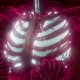 Human Body with Visible Lungs - VideoHive Item for Sale