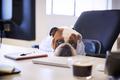 British Bulldog Dressed As Businessman Looking Sad At Desk - PhotoDune Item for Sale