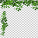 Corner Frame made of Ivy Leaves - VideoHive Item for Sale