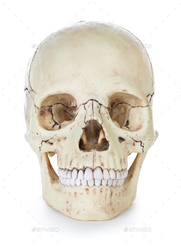 Human skull isolated on white background with clipping path. - Stock Photo - Images