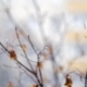 Snow Falling Against Faded Autumn Tree - VideoHive Item for Sale