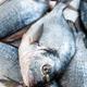 Fish. Fresh sea bream. Raw dorado fish - PhotoDune Item for Sale