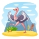 Ostrich Walking Along a Sandy Glade - GraphicRiver Item for Sale