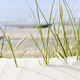 Tuft Of Grass In Beach Dunes, Germany - PhotoDune Item for Sale