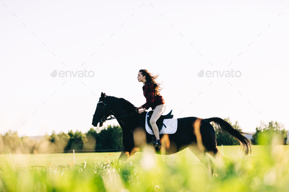 Girl storming through the field on a bay horse - Stock Photo - Images