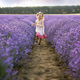 Among the lavender fields - PhotoDune Item for Sale