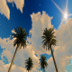 Road OF Palms - VideoHive Item for Sale