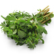 fresh purslane, edible weeds - PhotoDune Item for Sale