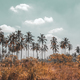 Palm trees plantation - PhotoDune Item for Sale