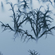 Forest In Fog - VideoHive Item for Sale