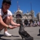 Woman Tourist Feeding Pigeons in the Square - St. Marks Square - Venice Italy - VideoHive Item for Sale