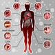 Human Internal Organs Template