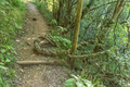 Strangler plant on the Tugela Gorge hiking trail