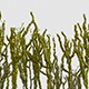 Plants - VideoHive Item for Sale