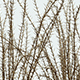 Spiny Plants - VideoHive Item for Sale