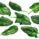 Spinach s. oleracea leaves, paths - PhotoDune Item for Sale
