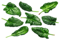 Spinach s. oleracea leaves, paths