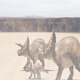 Dinosaur Family is Walking Through the Desert - VideoHive Item for Sale