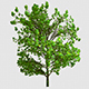 A Growing Tree - VideoHive Item for Sale