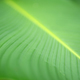 Green leaf background - PhotoDune Item for Sale